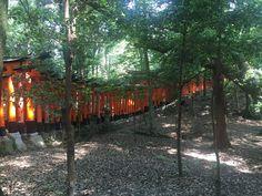 Kyoto, Explore, Plants, Plant, Planets, Exploring