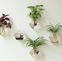 Set of 2, Wall Hanging Air Plants Terrariums Geometric Hexagon Air Plants Hanging Glass Planters Flower Pots Plant Containers Glass Vases