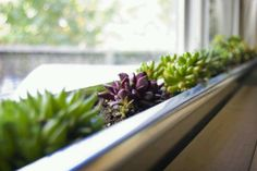 99 Best Window Boxes Indoors And Out Images Backyard Patio