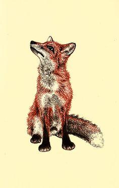 Scientific Illustration natalieillustrates: Vulpes.