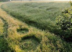 crop circle at Bosschenhoofd l |June 19 2012