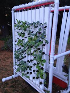 Vertical Hydroponic Farm   -  by BLT Robotics   >>   What a stupendous 'structable!