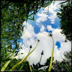Frog Perspective by Olli Malmivaara Forced Perspective, Photographs And Memories, Perspective Photography, Fairy Dust, Beautiful Sky, Make A Wish, Matilda, Beautiful Flowers, Clouds