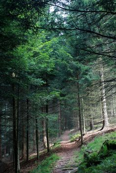 #5 Black Forest, Germany (Pictured - Path in Black Forest, Baden-Württemberg, Germany)