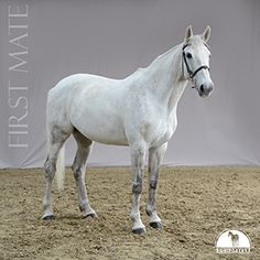 my horse,lovely, paard, foto, photography, studio, paardensport,kids , ik en mijn paard
