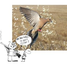 funny dove hunting photos - Google Search