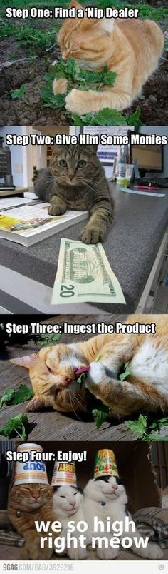 @Alli Elster haha cat nip to-make-me-smile