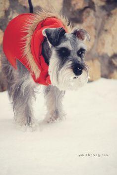 First Snow by Melissa Heard