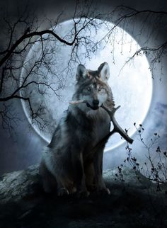 ILLUSTRATION  La pleine Lune ... wouuuhhh!