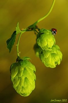 Ladybird's brewery by Jan Siwmir on 500px