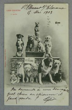 Antique_Circus_Dogs_Postcard