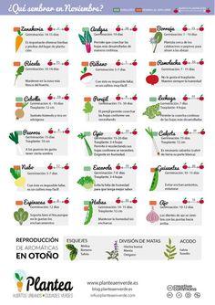 El Huerto en Macetas: ¿Qué sembrar en noviembre?