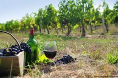 """The new issue of Air Canada's enRoute magazine featured an article on Greek wine, titled """"The Modern Face of Ancient Greek Wines. White Wine, Red Wine, Wine Away, Bucket List For Teens, Still Life Photos, California Wine, Pureed Food Recipes, Picnic Time, Wine Drinks"""
