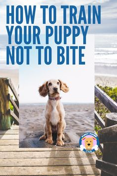 How to train your puppy not to bite and nip. It's natural for puppies to play bite. If you have a new puppy its important to train your dog not to bite too much. Check out these puppy training tips to get on the right track. #PuppyPowerClub #puppies #puppytraining