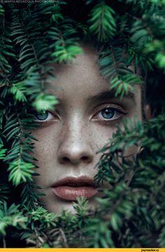 красивые картинки,милая,wood,лес,Природа,красивые фото природы: моря, озера, леса,forest