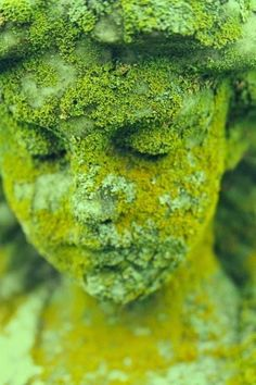 How to grow moss on outdoor statues, rock walls, pathways... anything! #garden