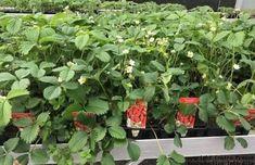 Les serres ouvertes au lycée agricole de Thuré | Localiv.fr Plants, Stair Gate, Plant Cuttings, Open Set, Plant, Planets