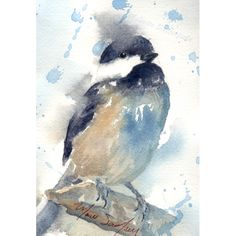 watercolor painting of birds | New Watercolor Bird Paintings – Chickadee and…