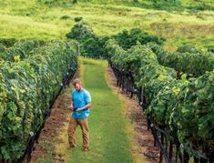 3 Upcountry Maui wine and spirits tours everyone's buzzing over Maui Hawaii, Hawaii Travel, Travel Essentials, Travel Tips, Fine Wine And Spirits, Order Wine Online, Road To Hana, Wine Reviews, Wine Tasting