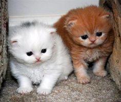 Encore: Rolex and Diamond [redux]  kitten