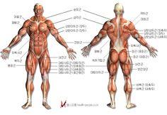 다리 근육 - Google 검색