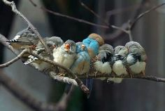 1 big happy family :)