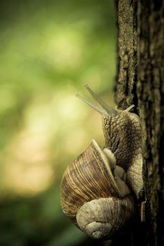 snail by ~lucoctober on deviantART
