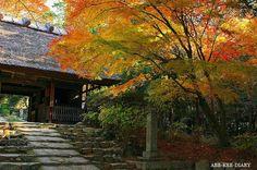 阿弥陀寺、門前のモミジ