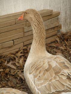 Canada Goose' official 4h