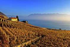 Lavaux region with vineyard and Geneva lake by autumn sunset, Vaud, Switzerland Places In Switzerland, Famous Places, Travel Photos, Monument Valley, Fine Art America, Vineyard, Sunset, Poster, Outdoor