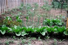 Permaculture and Soil: How to Follow Nature�s Lead to Grow Amazing Produce