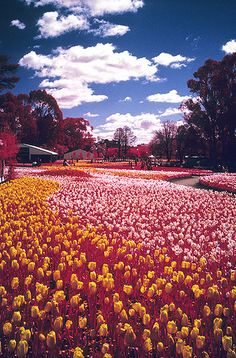 I like the visual of a mass of flowers ambling along the walkway.