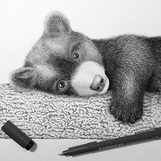 Snuggle up today like this little bear and do some drawing! Thank you Sarah for sharing this cutie with us! #STAEDTLER #mySTAEDTLER #bear #drawing #pigmentliner