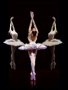 swans #ballet