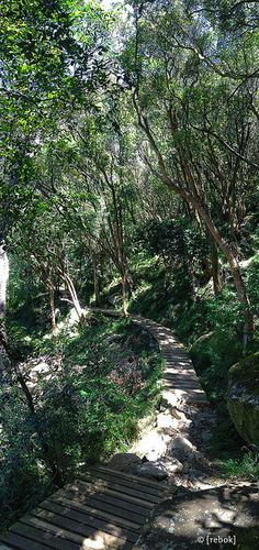Table Mountain - Contour Path - Cape Town, South Africa. Go to www.YourTravelVideos.com or just click on photo for home videos and much more on sites like this.
