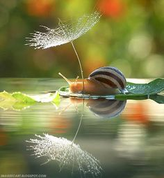 snail reflecting