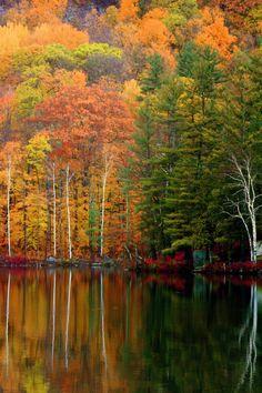 'Birch Trees Across the Lake' - photo by Matt H, via 500px