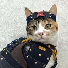 Ever wonder what your pet would look like as a Japanese samurai? Thanks to this company selling samurai armors for cats and dogs. Costume Chat, Cat Costumes, Funny Cat Pictures, Dog Pictures, Cat Armor, Pet Dogs, Dog Cat, Animals And Pets, Cute Animals