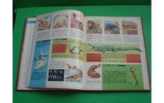 http://www.alamaula.com/capital-federal/diccionarios-y-enciclopedias/enciclopedia-estudiantil-editorial-codex-viiii/12297006
