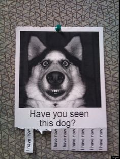 Have you seen this dog? | 30 Funny Uses Of The Tear-Off Tab Flyer (PHOTOS)