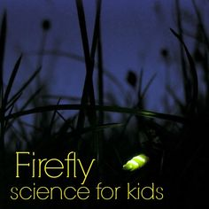 Firefly science for kids from The Hands-On Homeschooler