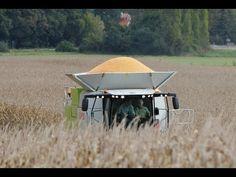 NEW CLAAS LEXION 770 Terra Trac   Corn Harvest