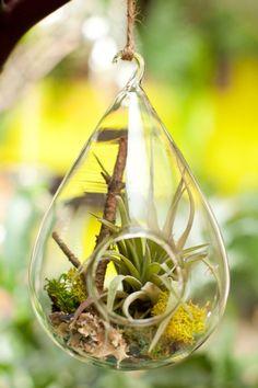 DIG Gardens » inside    Bubble Terrarium Dig Gardens, Terrariums, Plant Hanger, Vines, Succulents, Projects To Try, Bubbles, Green, Plants