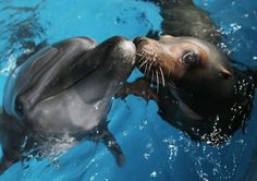 22 Adorable Animal Kisses (PICTURES)