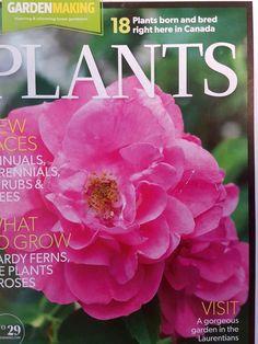 Nature Pictures, Rose, Garden, Flowers, Plants, Inspiration, Biblical Inspiration, Pink, Garten