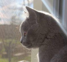 Zima, teplo, kontrola okolí z otevřeného okna.