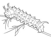 Swallowtail Butterfly and Caterpillar coloring page from Butterfly category. Select from 24114 printable crafts of cartoons, nature, animals, Bible and many more.