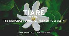 Tiare Tahitian Gardenia, the base of our Organic Hair Masks. Shop now! Hair Masks, Tahiti, Cool Hairstyles, Hair Care, Organic, Base, Shop, Flowers, Plants