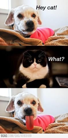 Hey cat!