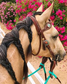 """Cool Western horse with braids and torquoise reins. ⚜️Sascha ⚜️ (@ridingonroan) on Instagram ❤️ #aqhaproud"""""""
